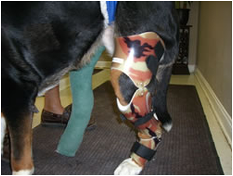 Dog Brace for Injured Stifle – Tamarack Habilitation Technologies